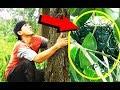 Fenomena Misterius Saat Berburu Sarang Burung Kepodang Dihutan  Mp3 - Mp4 Download