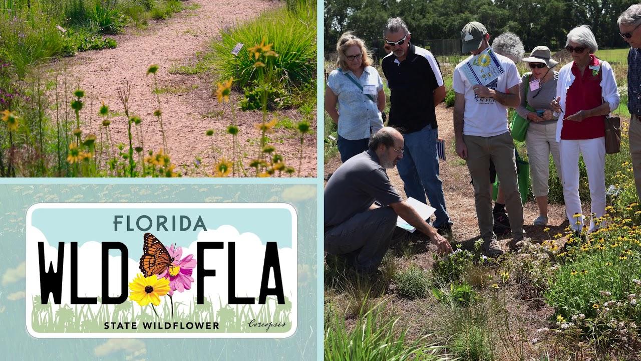 Florida's Native Wildflowers - Florida Wildflower Foundation