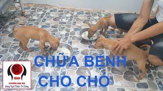 Hướng dẫn chữa bệnh đường ruột cho chó con: Tập 1