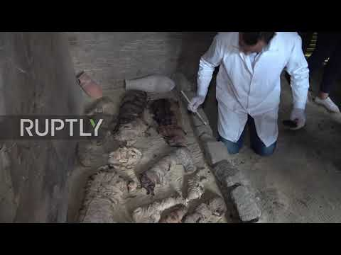 Egypt: Mummified cats, scarab beetles discovered in ancient tombs near Cairo