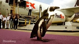 The Five Weirdest Shipments Ever Sent by FedEx