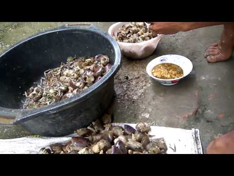 Makanan Paling Ekstrem Di Indonesia..... !!!  Lemen Yuyu