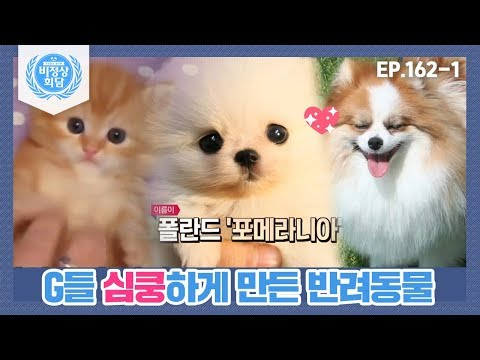 [비정상회담][162-1] 〈반려동물을 많이 키우는 나라?〉 G들 심쿵하게 만든 반려동물 (Abnormal Summit)