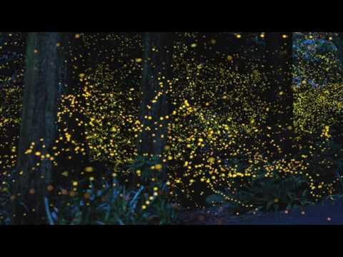 Fireflies ( Tommy Mason Remix)