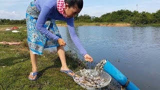 Fishing plastic pipe at my village | Unique Fish Trapping style