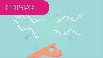 CRISPR in 4 Minuten erklärt