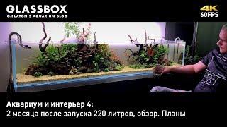 аквариум и интерьер 5: 2 месяца после запуска 220 литров, обзор