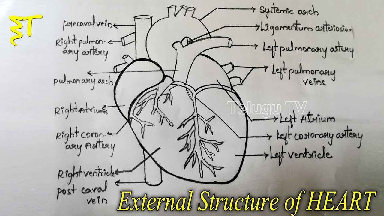 Important Drawings For Inter Exams How To Draw A External