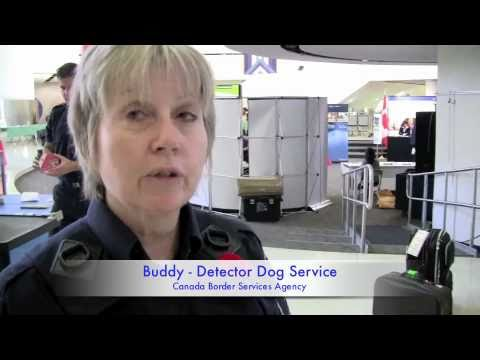 CBSA Detector Dog service