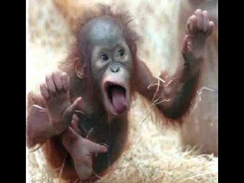 Helpful Monkey Wallpapers Entire Home Jad Fair Yo La Tengo Images, Photos, Reviews
