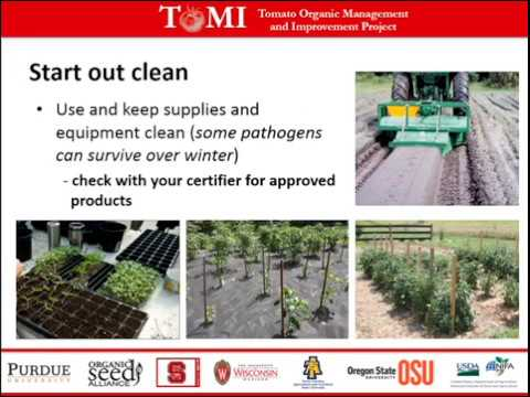 Organic Tomato Foliar Pathogen IPM