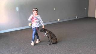 Brom The Boxer Working On Obedience Training And Agility Training