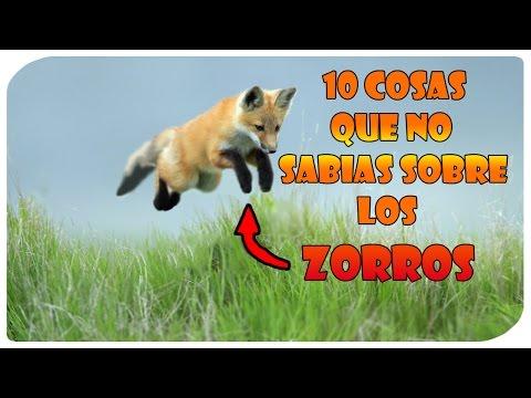 10 Cosas que no sabias del zorro - TopsZ1414