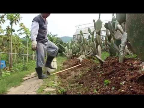 Hong Kong Farms Are not only organic but also tourist attractive