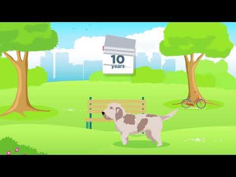 Doggle Guides - Petit Basset Griffon Vendeen - Dog Breed Info