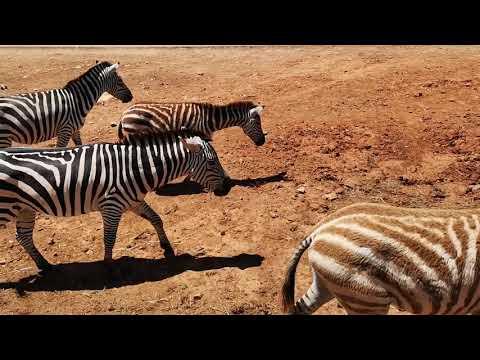 giornata al safari zoo di palma de mallorca