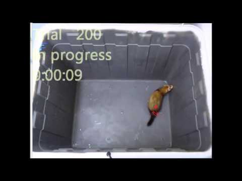 PLoS ONE : A Novel Video Tracking Method to Evaluate the Effect of Influenza Infection...