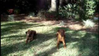 Dog Training - Impulse Control