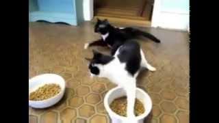 кошки после наркоза