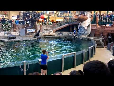 West Edmonton Mall - Marine Life - Sea Lion show part one | Alberta Edmonton