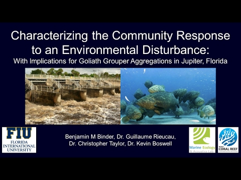 Environmental Disturbance/Goliath Grouper Aggregations - Ben Binder