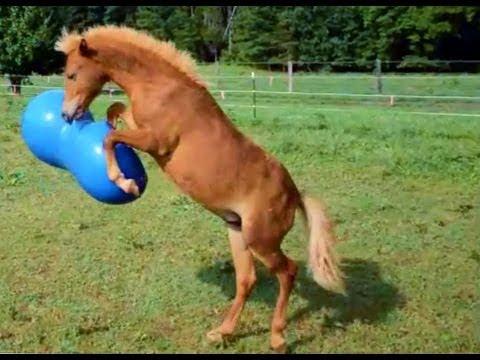 Spiele Auf Dem Pferd