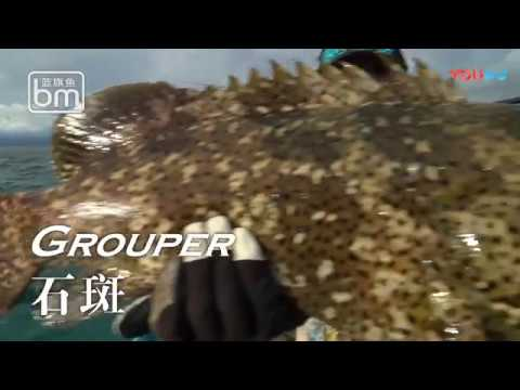 Catch Big Monster Fish at Papua province Indonesia