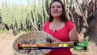 """""""Las Pitayas"""" Reportaje De Alberto Rebolledo"""