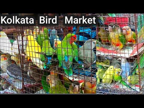 Kolkata Bird Market At Galiff Street Visit The Largest And Cheapest Bird Market In Asia