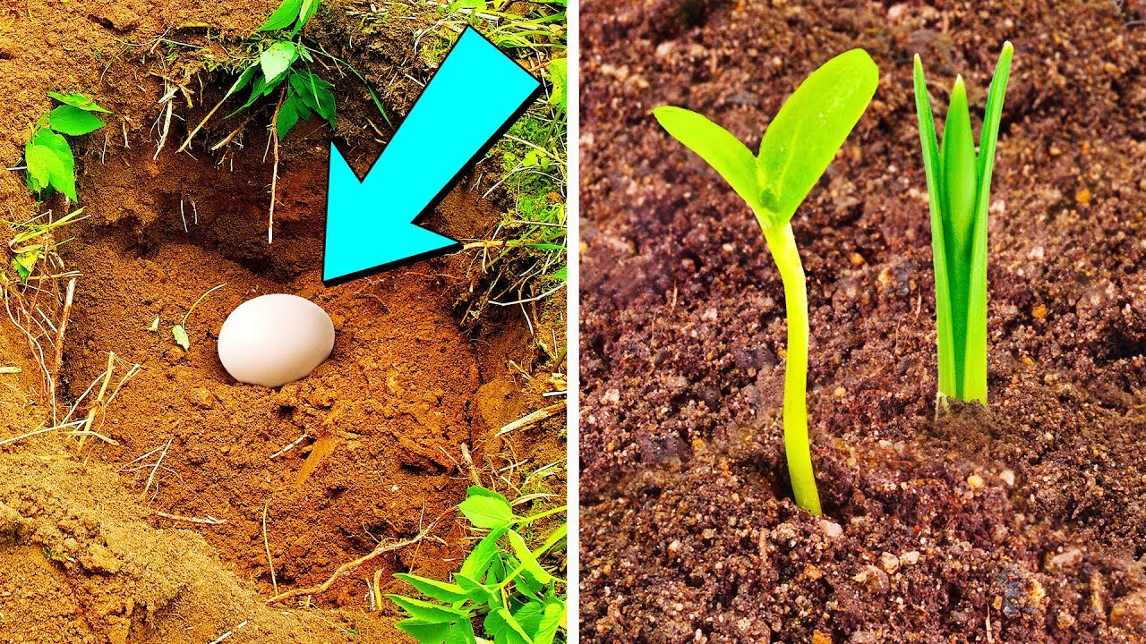Put An Egg In Your Garden And See What Will Grow - YouTube