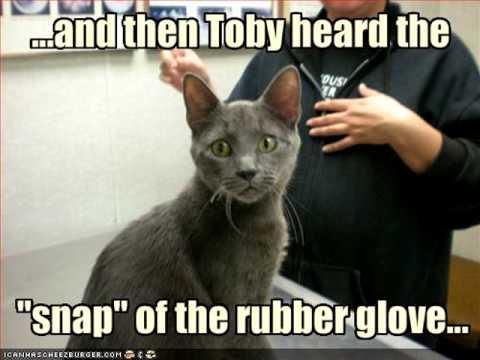 ICanHasCheezburger LOL Cats