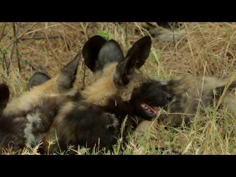 EXPLORE - Botswana Wildlife Safari