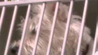 Что съела моя собака - часть 5: крысиный яд, застежки и теннисные мячи