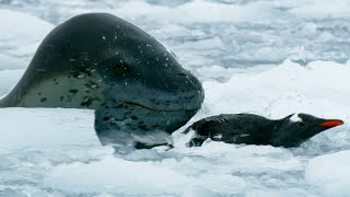 The Antarctic's Terrifying Predator   Wild Stories   BBC Earth