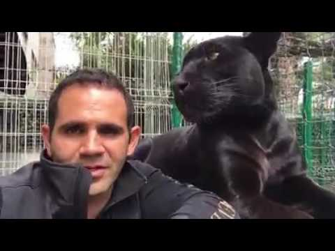 Black Panther-La Panthère noire