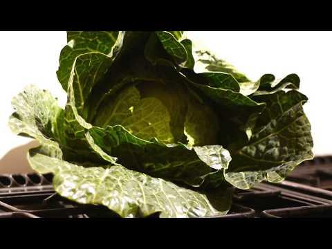 EAT LOTS OF DARK GREEN LEAF VEG.  E.G. CABBAGE