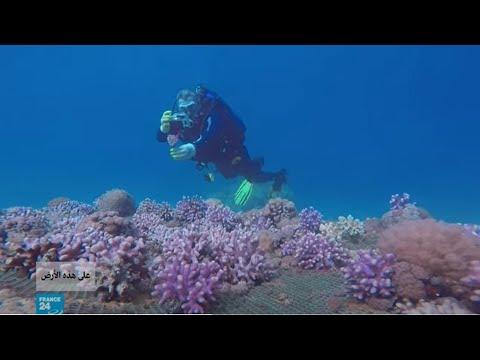 الإنسان والتلوث.. خطران يهددان الشعاب المرجانية في خليج العقبة بالأردن  - 15:58-2021 / 5 / 11