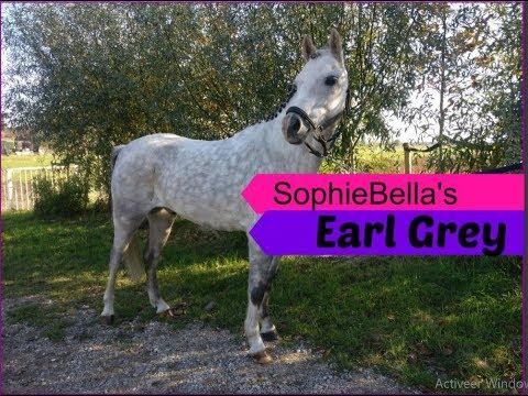 SophieBellas Earl Grey | SophieBella