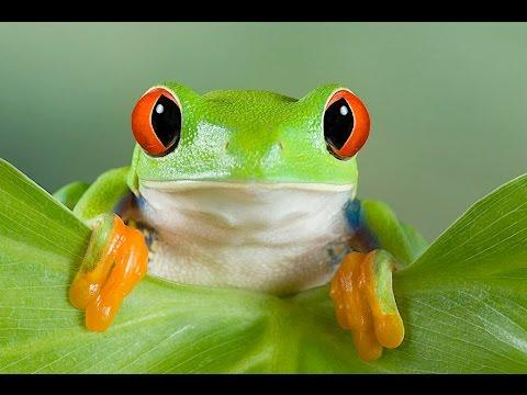 Народные приметы про лягушек