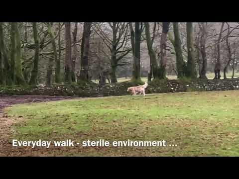 Dog Training Collar | Dog Care Training Collar | Training Dog with shock collar from YouTube · Duration:  1 minutes 10 seconds
