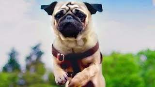 PATRICK Trailer (2018) Kids & Family, Dog Movie