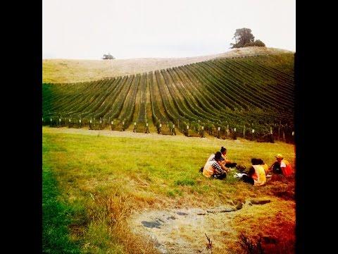 Backpacker's Nightmare Employment - Fruit Picking in the Vineyards of Blenheim, Marlborough