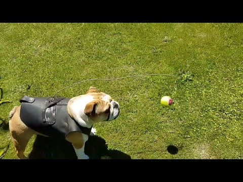 How to entertain your dog for hours (original)