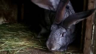 Камасутра кроликов или ваша девка балованая