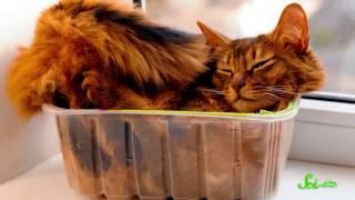Почему коты любят коробки?