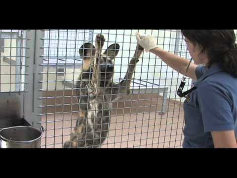 Denver Zoo Behavioral Husbandry Program Supports Animal Well Being