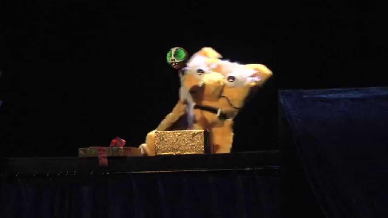 Il carnevale degli animali youtube