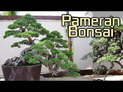 Pameran Bonsai / Bonsai Exhibition in Bali Island of Indonesia