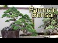 Pameran Bonsai / Bonsai Exhibition in Bali Island of Indonesia