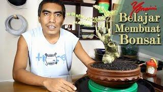 Bonsai Kawista #07 -  Pruning, Wiring dan Styling